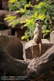 Zoo Magdeburg_260918_IMG_8205