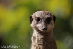 Zoo Magdeburg_260918_IMG_8207