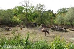 Zoo Magdeburg_260918_IMG_8210_1325