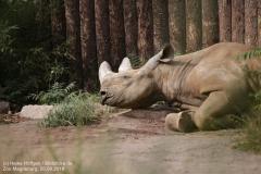 Zoo Magdeburg_260918_IMG_8211