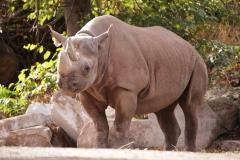 Zoo Magdeburg_260918_IMG_8213