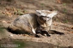 Zoo Magdeburg_260918_IMG_8218