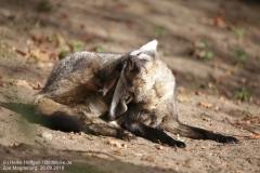 Zoo Magdeburg_260918_IMG_8222