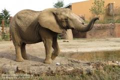 Zoo Magdeburg_260918_IMG_8240_1335