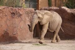 Zoo Magdeburg_260918_IMG_8244