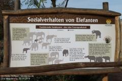 Zoo Magdeburg_260918_IMG_8253_1337
