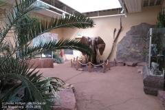 Zoo Magdeburg_260918_IMG_8253_1351