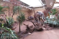 Zoo Magdeburg_260918_IMG_8253_1354