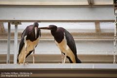 Zoo Magdeburg_260918_IMG_8258