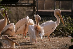 Zoo Magdeburg_260918_IMG_8486