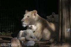Zoo Magdeburg_260918_IMG_8635