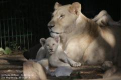 Zoo Magdeburg_260918_IMG_8637