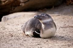 Zoo Magdeburg_260918_IMG_8655