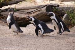 Zoo Magdeburg_260918_IMG_8657