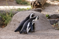 Zoo Magdeburg_260918_IMG_8658
