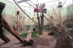 Zoo Magdeburg_260918_IMG_8659_1432