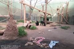Zoo Magdeburg_260918_IMG_8659_1434