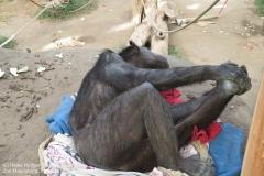 Zoo Magdeburg_260918_IMG_8659_1436