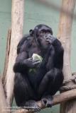 Zoo Magdeburg_260918_IMG_8662
