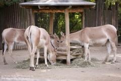 Zoo Magdeburg_260918_IMG_8668