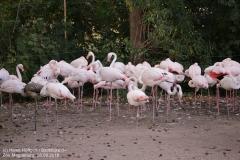 Zoo Magdeburg_260918_IMG_8670