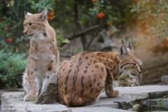 Zoo Magdeburg_260918_IMG_8675