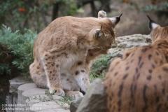 Zoo Magdeburg_260918_IMG_8684