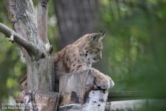 Zoo Magdeburg_260918_IMG_8688