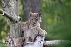 Zoo Magdeburg_260918_IMG_8689