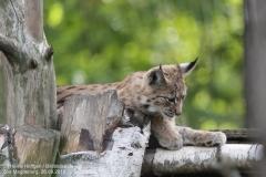 Zoo Magdeburg_260918_IMG_8692