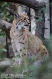 Zoo Magdeburg_260918_IMG_8711