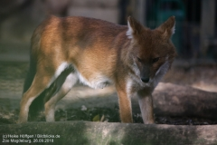 Zoo Magdeburg_260918_IMG_8725