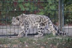 Zoo Magdeburg_260918_IMG_8731