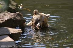 Zoo-Muenster-260909IMG_5666