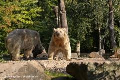 Zoo-Muenster-260909IMG_5756