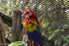 Zoo-Muenster-260909IMG_5785