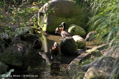 Zoo-Muenster-260909IMG_5790