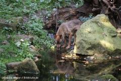 Zoo-Muenster-260909IMG_5905
