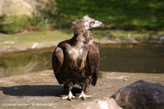 Zoo-Muenster-260909IMG_5930