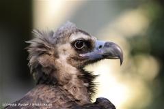 Zoo-Muenster-260909IMG_5934