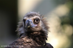 Zoo-Muenster-260909IMG_5938