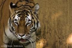 Zoo-Muenster-260909IMG_5958
