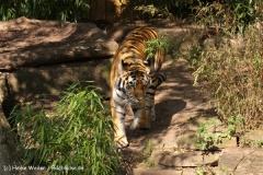 Zoo-Muenster-260909IMG_5983