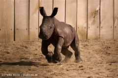 Zoo-Muenster-260909IMG_6014