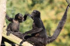 Zoo Osnabrueck 101010- IMG_2162