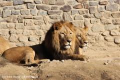 Zoo Osnabrueck 101010- IMG_2186