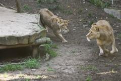 Zoo Osnabrueck 101010- IMG_2192-2