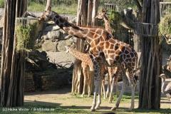 Zoo Osnabrueck 101010- IMG_2207