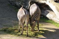 Zoo Osnabrueck 101010- IMG_2209