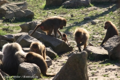 Zoo Osnabrueck 101010- IMG_2234